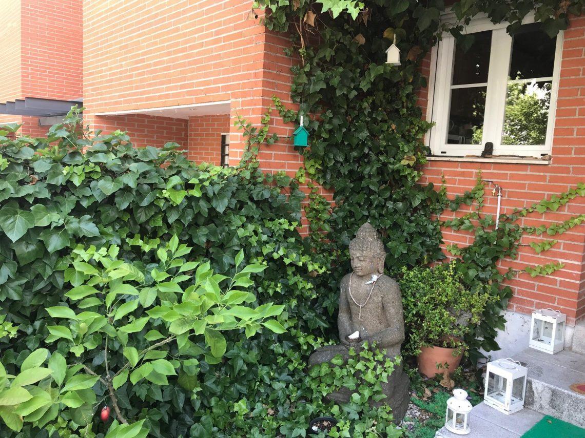 buda-medita